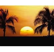 Dream Wedding With Hawaii Beach Sunset Wallpaper Best Travel Sites