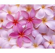 Top 10 Flowers Wallpapers