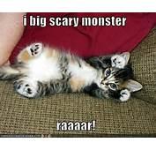Funny Photos Sneeze Dancing Gifs Cat Captions