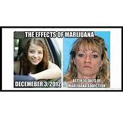 Marijuana Addicts Before And After Quotes