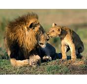 Father And Son  Wild Animals Wallpaper 3310990 Fanpop