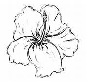 Displaying 10&gt Images For  Hawaiian Flowers Pencil Drawings