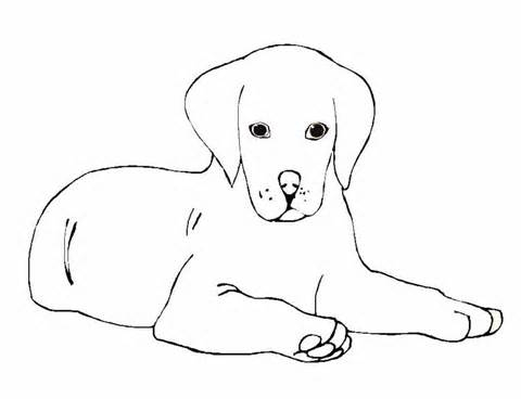 labrador puppies Colouring Pages