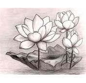 To Draw Flowers And Few Most Inspiring Color Pencil Flower Drawings