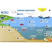 Irving Blake A Freshwater Ecosystem