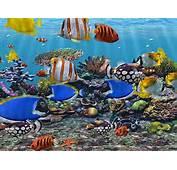 3D Fish Screensaver Free Virtual Aquarium Download