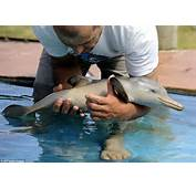 Cute Baby Dolphin Saved From Death