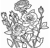 Fleurs Flowers Coloring Pages
