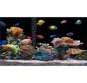 Screen Saver Animation 3d Fish Screensaver Free Virtual Aquarium