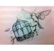 Bird Cage Drawing Tumblr