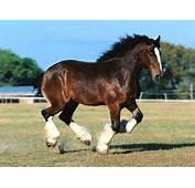 Beautiful Horse Hd Wallpapers