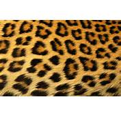 Leopard Print Background X  Free Images At Clkercom Vector Clip