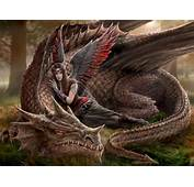 Cool Pictures Of Dragons 1