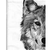 Wolf Sketch By Shanita Lyn Ballpoint Pen In Moleskine  Otsua