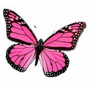 Pink Butterfly Network