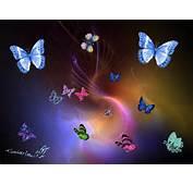 Butterflies Colourful