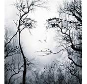 Face In Trees Illusion  Video