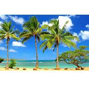 Collection Of Beautiful Palm Tree Wallpapers Are Available In 1024 To