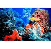Photo © Florida Keys National Marine Sanctuary