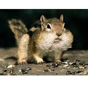 Funny Animals Photos  ThemesCompany