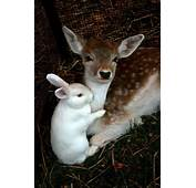 Here Are 10 Heartwarming Pictures Of Interspecies Friendships  Who