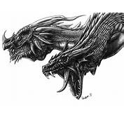 20 Awesome Dragon Drawings  Top Design Magazine Web And