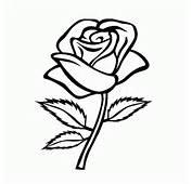 Dibujo De Rosas Para Colorear Dibujos Infantiles