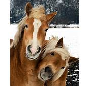 Cute Pictures Of Horses And Ponies Just Animals  Part 5