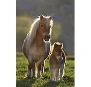 Cute Pictures Of Horses And Ponies Just Animals