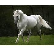 Horse Wallpaper Dark Fantasy