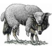 Wolf In Sheep Clothing Im Thinking Of Making This My Next Tattoo