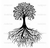 Simple Oak Tree Drawing Willow Black And White