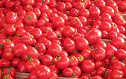 From Spain With Love- La Tomatina | Lottery Magazine ...