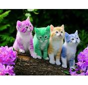 Beautiful Cat Spring Colors Rainbows Cute Kitty Easter Eggs