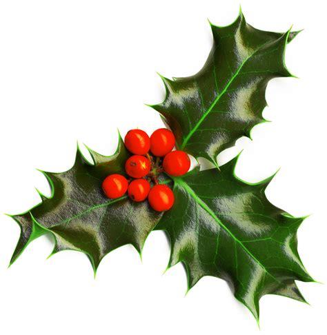 Christmas Plants: Holly   Английский в Ясенево