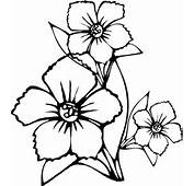 Flower Coloring Pages To Print  Page