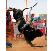 Bull Riding Gear Equipment