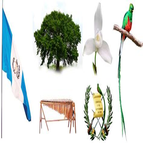 Simbolo FAO image 11