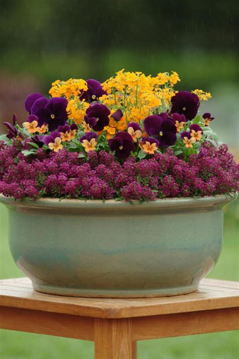 Container Garden with Pansies