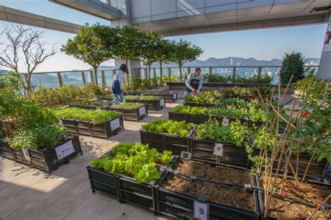 Rooftop Vegetable Garden Design