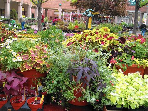 Vegetable Garden Plants Sale